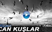 Gökyüzünde Uçan Kuşlar